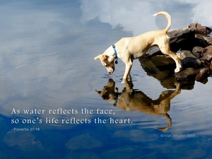 As water reflects the face, so one's life reflects the heart.
